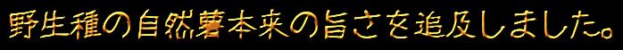 大柄ロゴ1