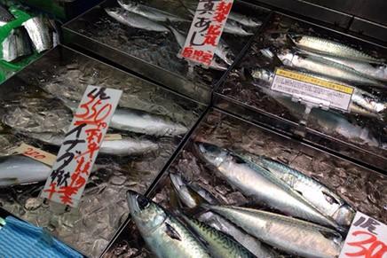 食材特集!「旬の魚」について(6月~8月編)