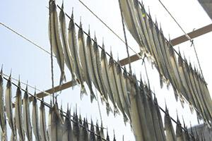 干物 食材特集!「旬の魚」について(6月~8月編)