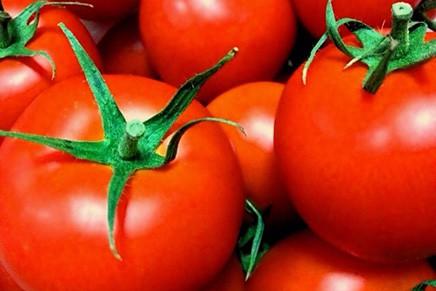 食材特集!「トマト」について